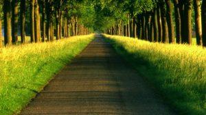 O Caminho do Amor
